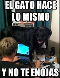 Spanish Class Memes on Pinterest | Chistes, Spanish Jokes and Spanish via Relatably.com