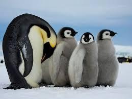 cute penguins. Beautiful Penguins Cutebabypenguin1 Inside Cute Penguins P