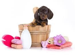 dog in bath tub with accessories
