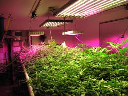 Kitchen Grow Lights 17 Best Images About Marijuana Grow Lighting On Pinterest