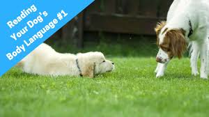 Learn How To Read A Dogs Body Language And Understand Dog Behavior 1