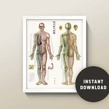 Acupuncture Wall Charts Download Acupuncture Chart 8x10 Or 16x20 Wall Art Instant Digital Download Large 600dpi File