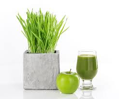 wheatgr for weight loss karma clinic