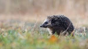 awesome hedgehog free wallpaper id 241845 for full hd puter