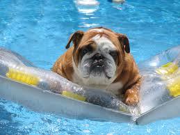 Summertime Dangers for Dogs: Heat Stroke & Drowning