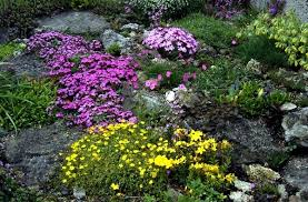 Small Picture Creating a rock garden where plants are best placed Interior