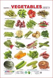 Vegetables Chart Vegetables Flowers Educational Wall Chart Buy Vegetable Learning Chart For Kids Wall Chart For Children Education Kids Wall Chart Product On