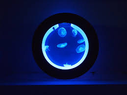 moon jellyfish in a cubic orbit 20 desktop jellyfish tank complete with colour changing led