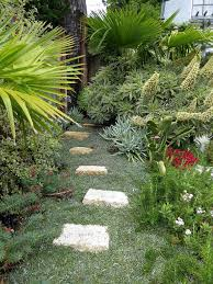 a path of pavers on dymondia a dense and durable ground cover photo