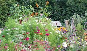 grow a cut flower garden for homegrown