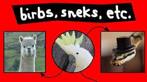 Birbs Sneks Other Aninmals