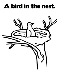 Bird Nest Coloring Page Birds Of Coloring Page Page Humming Bird