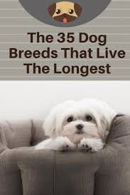 Longest Living Dog Breed Chart Here Are The 35 Dog Breeds That Will Be Your Best Friend The