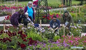 canada burlington royal botanical gardens rose garden