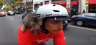 Cat Riding on Back of Scooter Stirs Controversy - Life With Cats