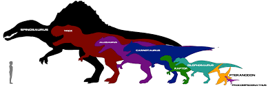 animal sizes chart rehistoric rp carnivore size chart by albinoraven666fanart on deviantart