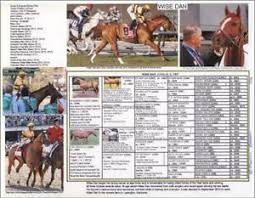 Horse Pedigree Chart Details About Race Horse Wise Dan Photo Picture Pedigree Chart Racing