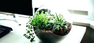 small office plant. Good Office Plants Astonishing Best Desk Small Indoor Flowering Plant E