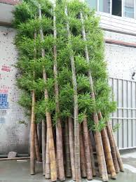 Small Picture Garden Design Garden Design with Hardy Bamboo Palm Chamaedorea