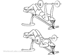 Decline Barbell Bench Press  Chest Exercise GuideDecline Barbell Bench