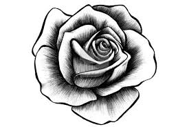 Hand Drawn Rose Collection Tattoos Ideas Tattoos Rose Tattoos