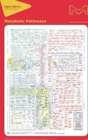 Metabolic Pathways Chart Huge Metabolic Pathways Poster For Download Interactive