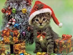 Christmas Kitten HD Wallpapers - Top ...