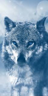 Wolf 4K Wallpaper #54