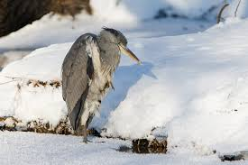 Птицы в городе По дороге на работу учебу или в магазин вы обязательно встретите птиц Нет таких населенных пунктов где бы они не нашли себе место для жизни