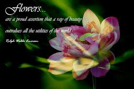 The Beauty Of Flowers Quotes Best Of Flowers Are A Proud Assertion That A Ray Of Beauty Outvalues All