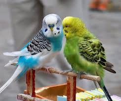 نتیجه تصویری برای تصاویر دو پرنده در کنار هم