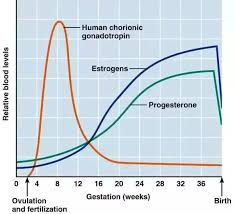 What Is The Difference Between Pre Ovulation Progesterone