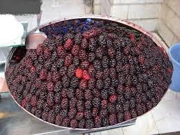 Aadil Aadil5255 On PinterestIranian Fruit Trees