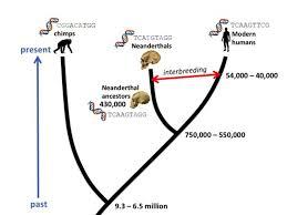 Human Evolution Timeline Chart Molecular Clocks Track Human Evolution Human World Earthsky