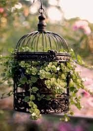 bird cage decor