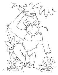 Small Picture Chimpanzee Coloring Pages Chimpanzee coloring page 2 spesific