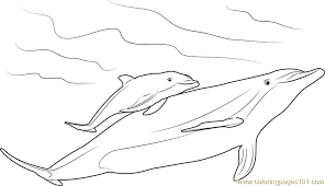 Small Picture Mother and Baby Dolphin Coloring Page Free Dolphin Coloring