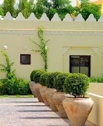 great plants for pots best plants for outdoor pots full sun best evergreen plants for patio pots