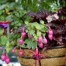 703 Best Container Gardening Ideas Images On Pinterest  Pots Container Garden Shade Plants