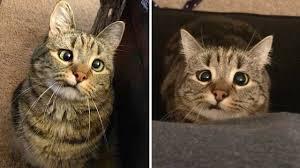 <b>Cross</b>-<b>Eyed Cat</b> Still Loves Life - YouTube