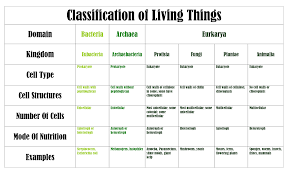 6 Kingdoms Of Living Things Chart 64 Bright Archaebacteria Characteristics Chart