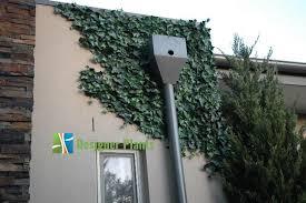 faux ivy wall paulbabbitt com