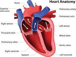 Heart Health And Aging
