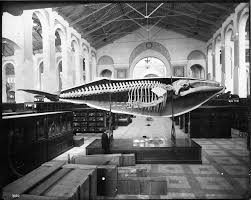 「the smithsonian museum, early days」の画像検索結果