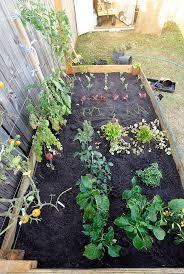 florida vegetable gardening. Beautiful Vegetable Gardening In South Florida Garden E