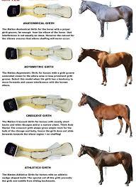Girth Size Chart Horse Ea Mattes Crescent Dressage Girth W Sheepskin Horses