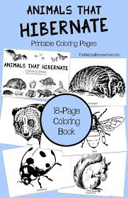 s that hibernate in winter printable coloring book pre printablespre activitiesfree
