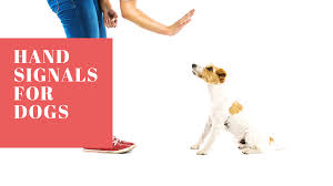 Utilizing Hand Signals In Dog Training
