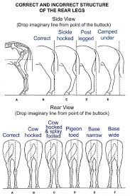 Things To Look At When Assessing Horses Good Conformation A