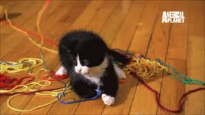 Image result for yarn  gif